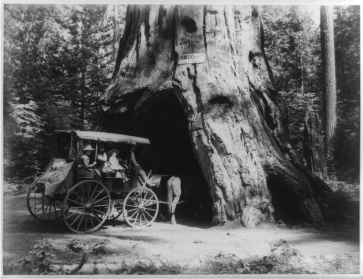 Pioneer cabin drive trought Sequoia 1887